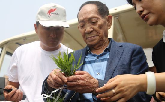 袁隆平的两个梦:禾下乘凉和杂交水稻覆盖全球梦